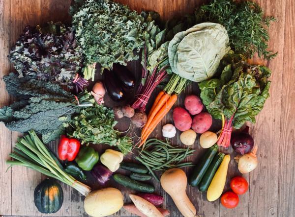Medium Veggie Box