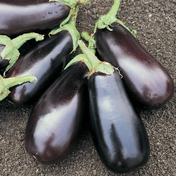 Italian eggplant (2lbs)