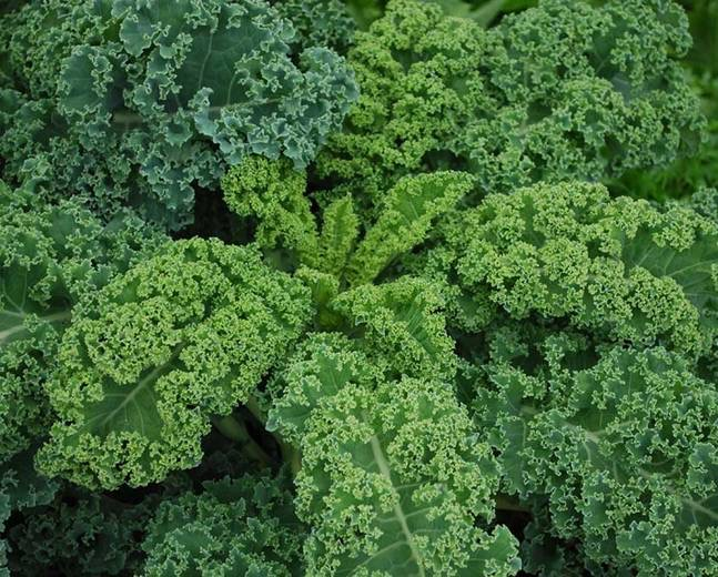 Curly kale(bunch)