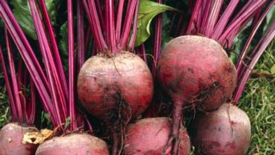 Beets(bunch)