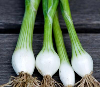 White spring onions(bunch)