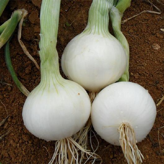 White onion- 1 pound