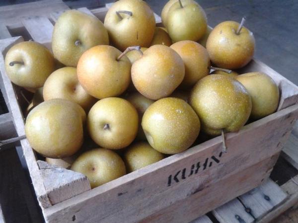 Asian Pears / 2 lb. bag