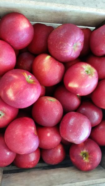 Apples / Crimsoncrisp (half bushel box)