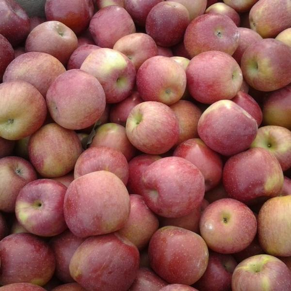 Apples / Fuji (half bushel box)