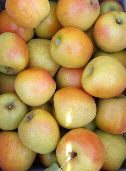 Apples / GoldRush (half bushel box)