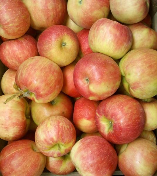 Apples / Honeycrisp (half bushel box)