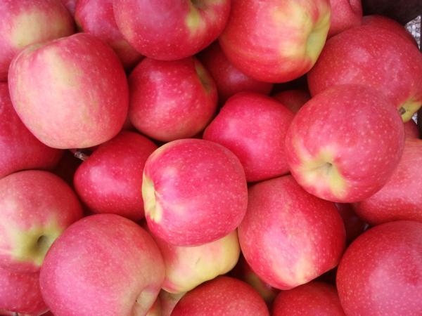 Apples / Pink Lady (half bushel box)