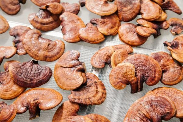 1 oz dried reishi
