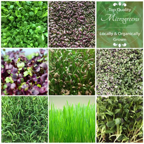 8 LB Variety Pack - Your choice of 8 microgreens - $40