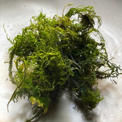 x Add On | Double Handful of Moss