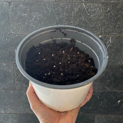 xAdd On | Pot with Potting Mix