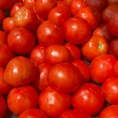 Round Canning Tomato Box