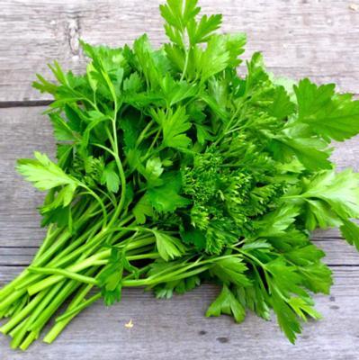 Parsley - Flat Leaf Italian