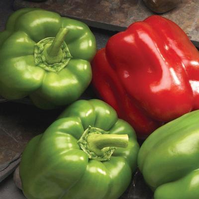 Peppers - Better Belle