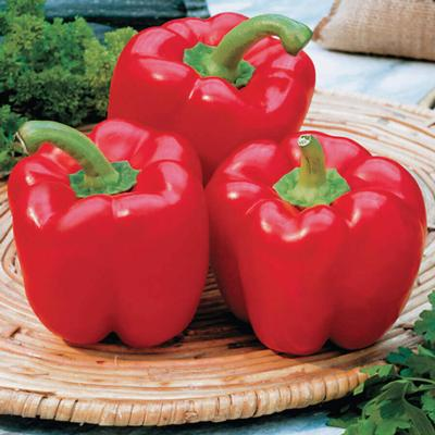Peppers - Red Beauty