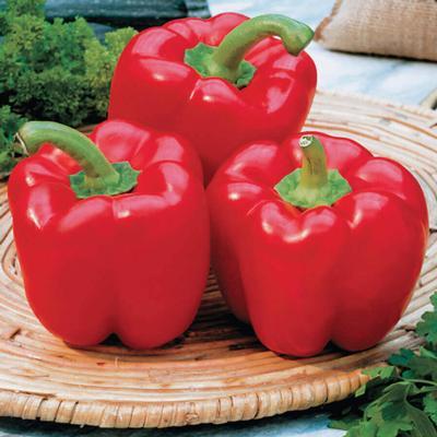 Pepper, Red Belle