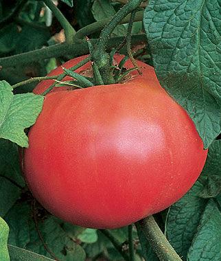 Tomato, Brandywine (Heirloom)