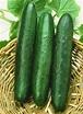 Cucumbers, Sweet Slice