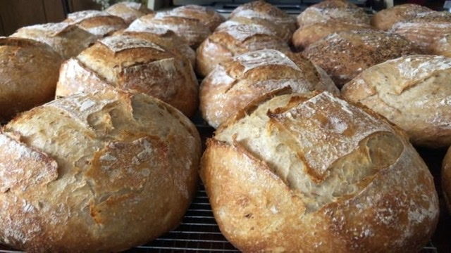 Sourdough Boules - Plain