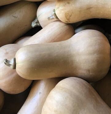 Butternut Squash - Organically Grown